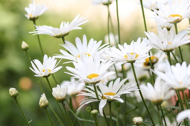 fleurs sous le soleil